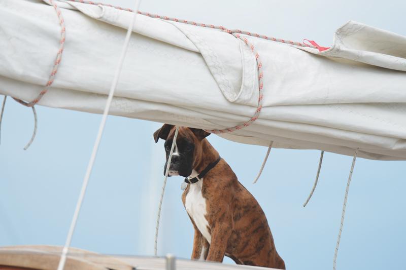 doggy on board!